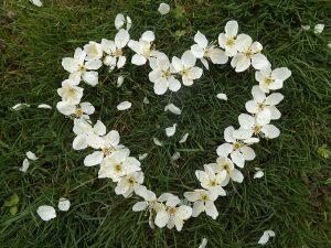 heart-1254343